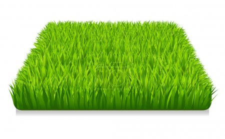 Illustration for Green grass - Royalty Free Image