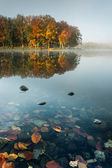 Colourful Autumn Forest reflecting in Calm Lake at Sunrise