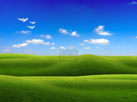 Green grass field and sky