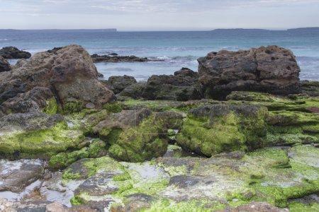 Sea Gulls in Jervis Bay