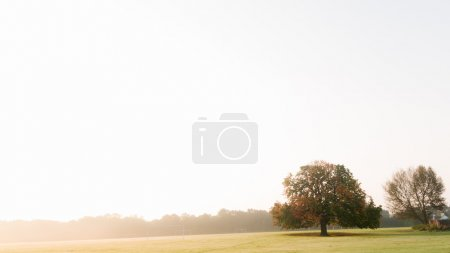 Photo for Lone tree on low horizon in a morning sunglight against white sky. - Royalty Free Image