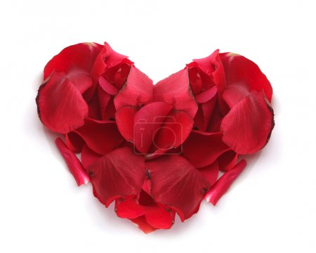 Heart of the petals of red roses