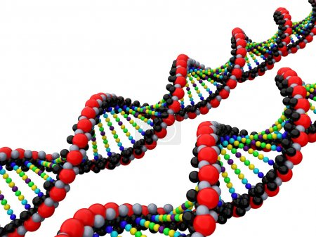 Photo for 3d isolated dna on the  white background - Royalty Free Image