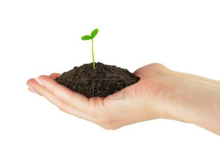 Photo pour Semis vert plante whith sol dans la main - image libre de droit