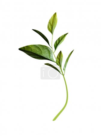 3D roślin