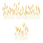 Ripe Ears wheat set Isolated detailed template