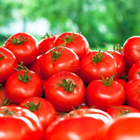 Photo for Fresh tomatoes outdoor - Royalty Free Image