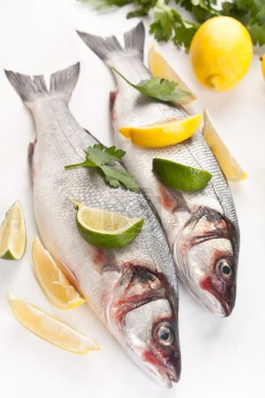 Photo for Raw seabass fish with hebs, limes and lemons on white background - Royalty Free Image