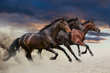 Three horses running at a gallop