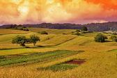 Grass Field Sunset Landscape