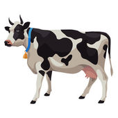 Black and white cow with bell side view isolated