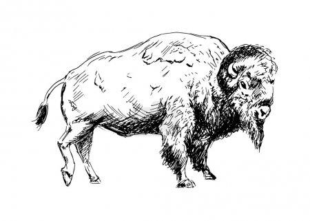 Illustration pour Une main dessinant un bison. Illustration vectorielle - image libre de droit