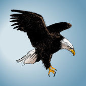 Color drawing of an eagle