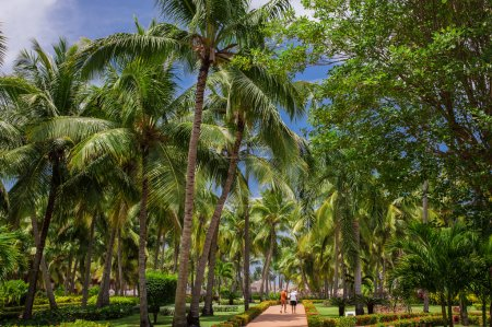 Photo for A green tropical forest. Pathway in tropical park - abstract travel background. - Royalty Free Image