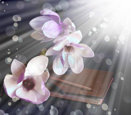 Photo pour Fond de printemps avec les fleurs de magnolia et de sunrashine - image libre de droit