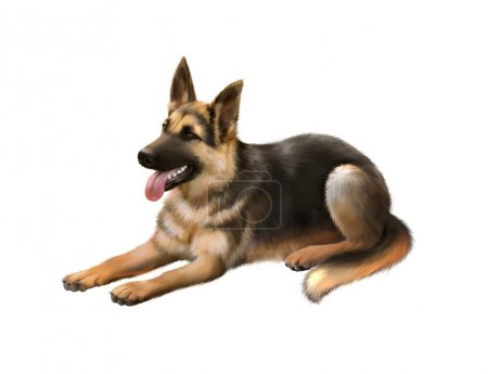 German shepard dog isolated on white background...
