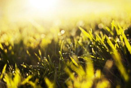 Orange green grass
