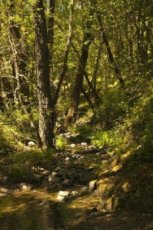 Photo pour Fond de nature avec le soleil, vert paysage avec les rayons du soleil de printemps. forêt ensoleillé le matin. - image libre de droit