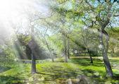 Spring landscape with sunshine