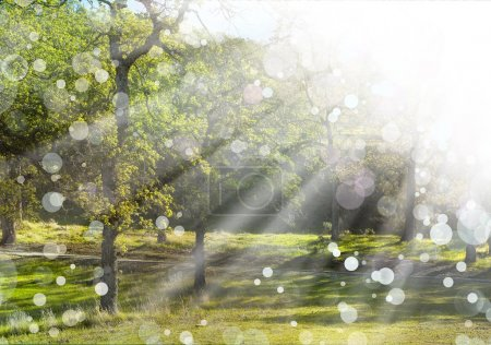 Photo for Spring nature background with sunshine, green landscape with sun beams. Sunny forest early in the morning - Royalty Free Image