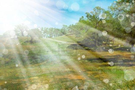 Photo pour Fond de nature avec le soleil, vert paysage avec les rayons du soleil de printemps. forêt ensoleillé le matin - image libre de droit