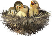 Four hungry baby sparrows in a nest wanting the mother bird to come and feed them Bird nest with young birds