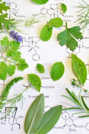 Photo pour Feuilles de plantes fraîches sur la feuille scientifique - image libre de droit