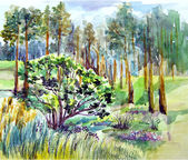 Forest, nature illustration
