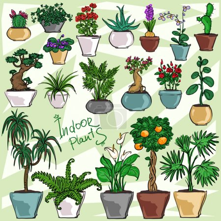 Illustration for Indoor Plants, hand drawn collection - Royalty Free Image