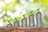 Bäume wachsen in einer Sequenz von Keimen auf Haufen von Münzen