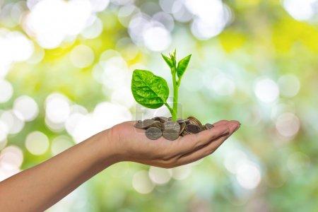 main tenant l'arbre qui pousse sur les pièces d'or - économiser de l'argent
