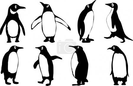 Illustration for A collection of 8 vector penguins isolated on a white background. - Royalty Free Image