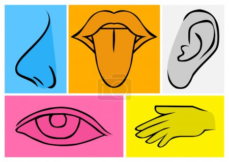 Human Senses Illustration