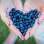 Fresh blueberries in female hands...