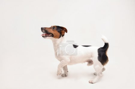 Playing funny dog
