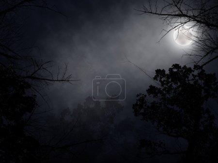 Photo pour Forêt sombre au fond de la nuit - image libre de droit