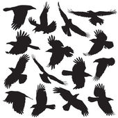 Crow silhouette collection vector set 01
