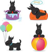 A set of funny dogs