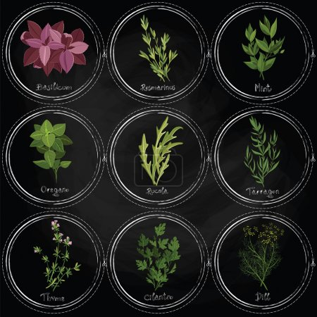 Illustration for Vector colorful herbs on the surface of the slate with frames painted with chalk. Dark herbs set. Vector illustration - Royalty Free Image