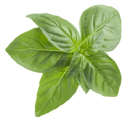 Photo for Basil leaves isolated on white background - Royalty Free Image
