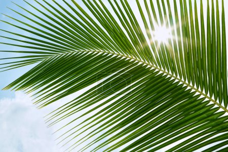 Green palm leaves in the sunshine