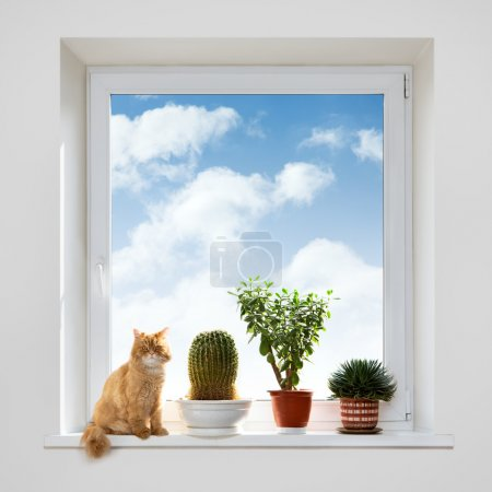 Cat and house plants