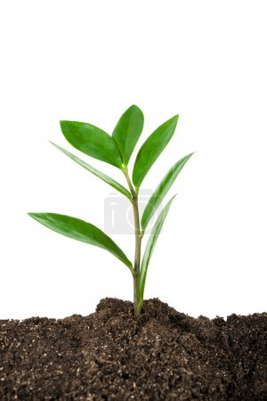 Photo for Green young plant on white background - Royalty Free Image