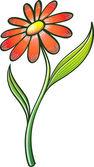 Elegant orange daisy