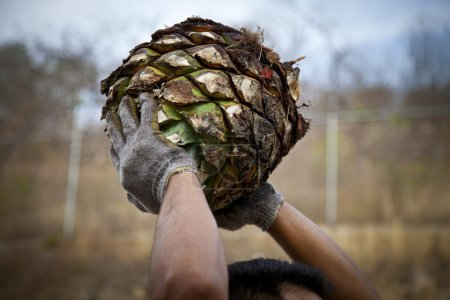 A man work in tequila industry