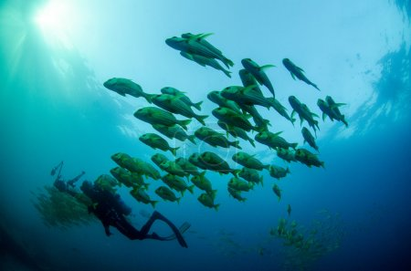 Divers interacting with underwater life