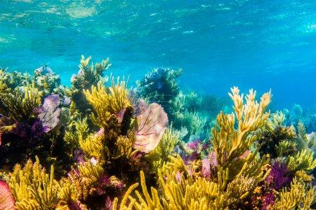 Coral reef scenics