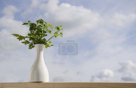 Parsley in flowerpot background