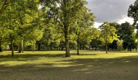 Photo pour Arbres dans le parc avec de l'herbe - image libre de droit