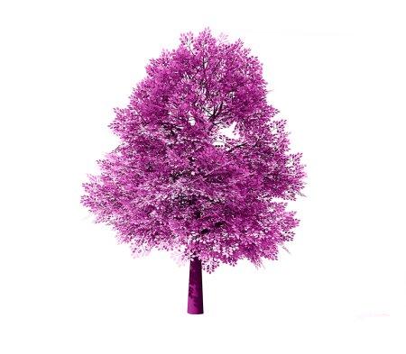 Photo pour Arbre à feuilles caduques isolé sur fond blanc - image libre de droit